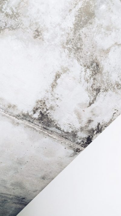 damp mould in home